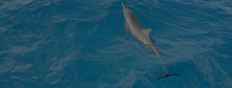 O que os empreendedores e os Golfinhos têm em comum?