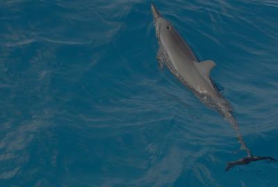 ¿Qué tienen en común los delfines y los emprendedores?